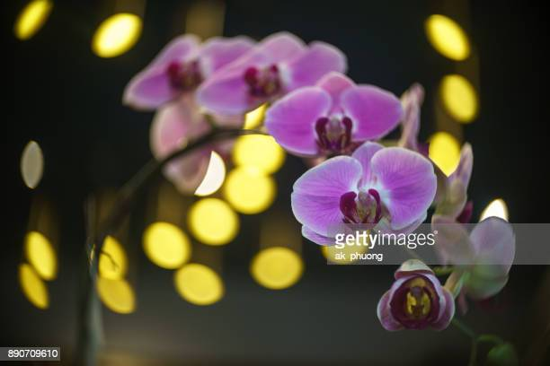 Orchid on beautiful background