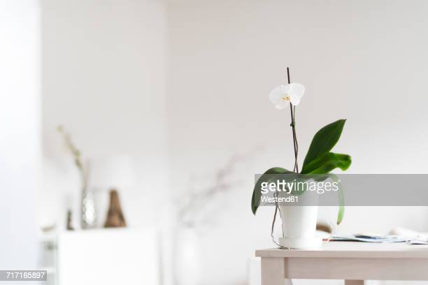 Orchid on table at home