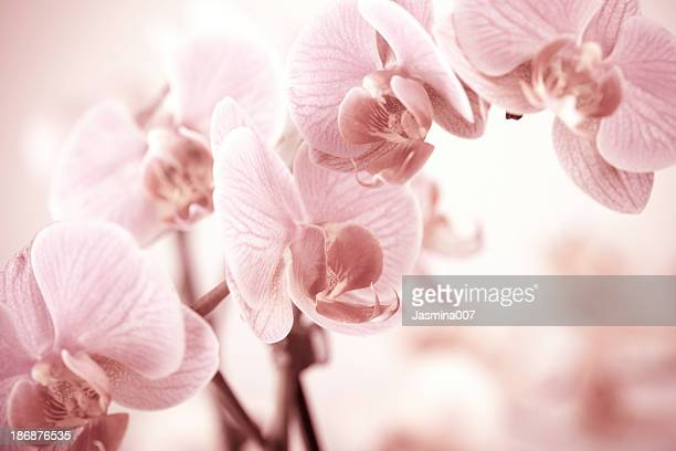 orchid - orchid stock pictures, royalty-free photos & images