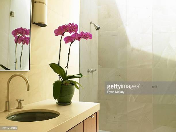 Orchid plant on bathroom vanity