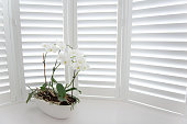 Orchid shutters