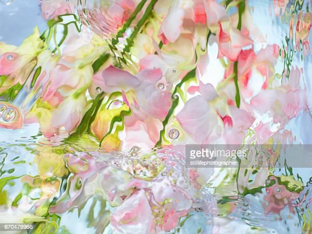 Orchid under warter
