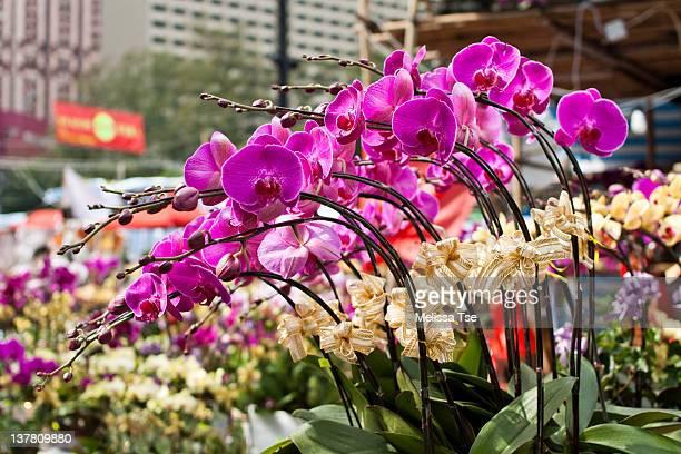Orchids at Lunar New Year Fair in Hong Kong