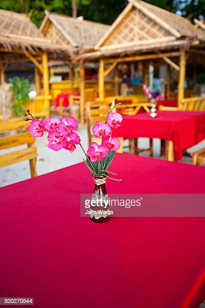 orchids, beach setting, thailand - jake warga stock pictures, royalty-free photos & images