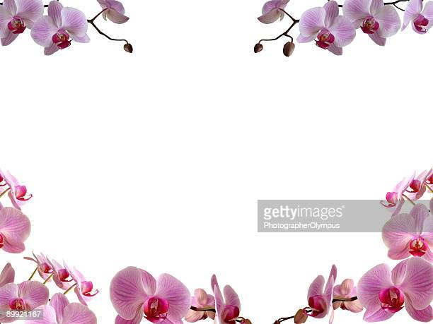 orchids frame/ border - orchid flower stock pictures, royalty-free photos & images
