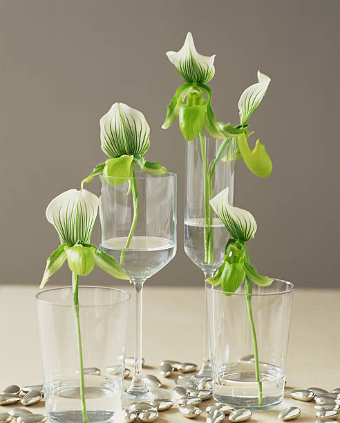 Orchids in glasses