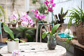Orchids in the garden. Blooming orchids in a winter diy glass garden