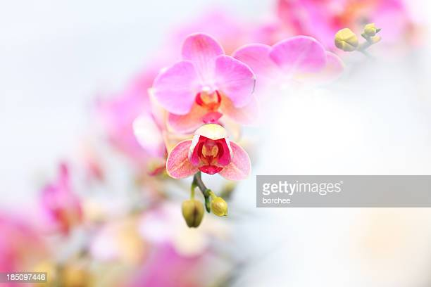 Orchideen