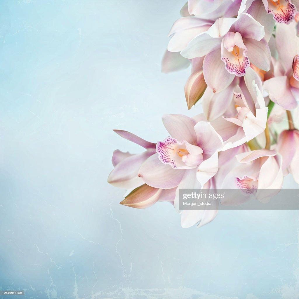 Orchids : Bildbanksbilder