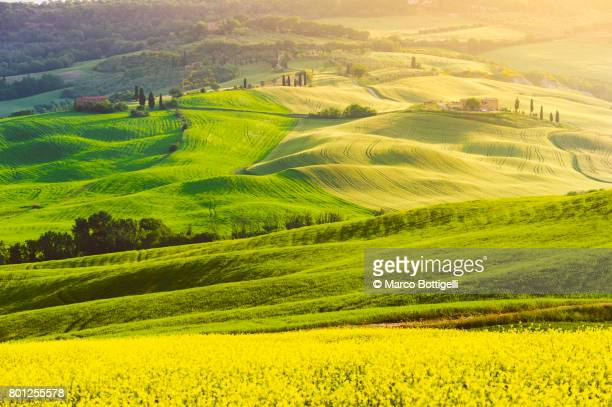 orcia valley. tuscany, italy. - unesco welterbestätte stock-fotos und bilder