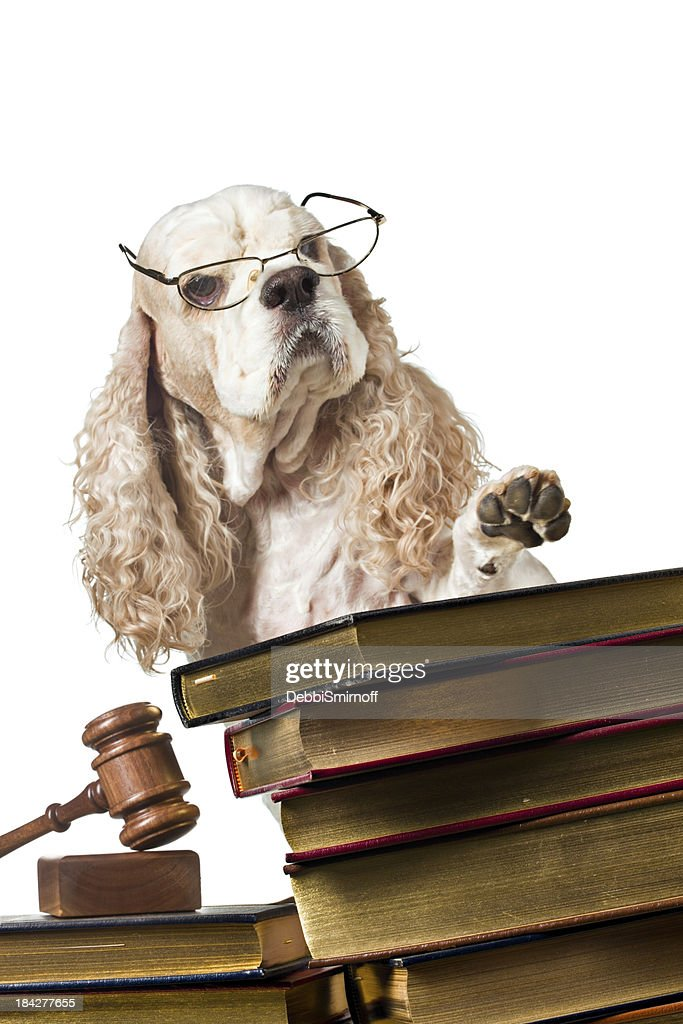 Order In The Court : Stock Photo
