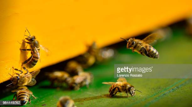 ordinary hard work - beehive stock pictures, royalty-free photos & images