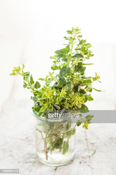 Oregano in a glass