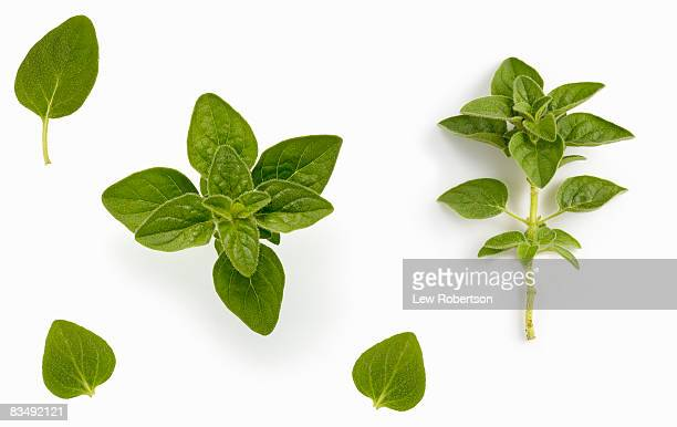 Oregano on white