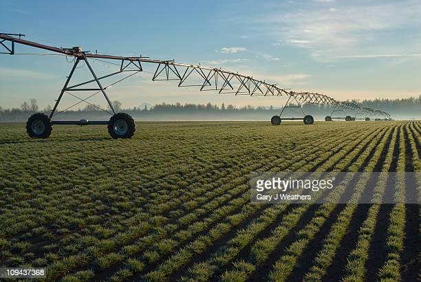 usa, oregon, agricultural sprinklers in field - sprinkler system stock pictures, royalty-free photos & images