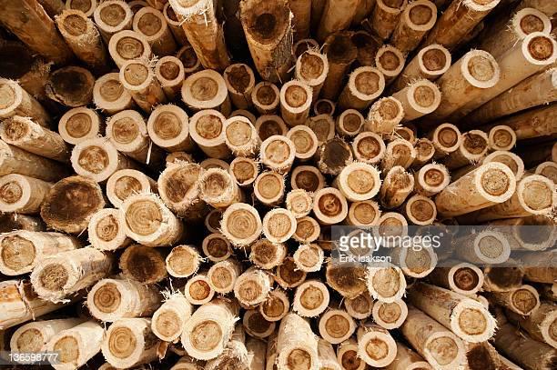 USA, Oregon, Boardman, Full-frame shot of timber stack