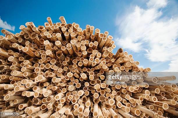 USA, Oregon, Boardman, Stack of timber against blue sky