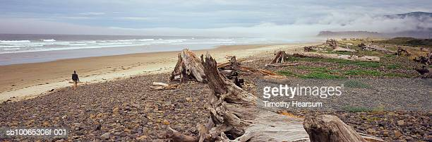 usa, oregon, cape meares with driftwood and rocky shore in foreground - timothy hearsum fotografías e imágenes de stock