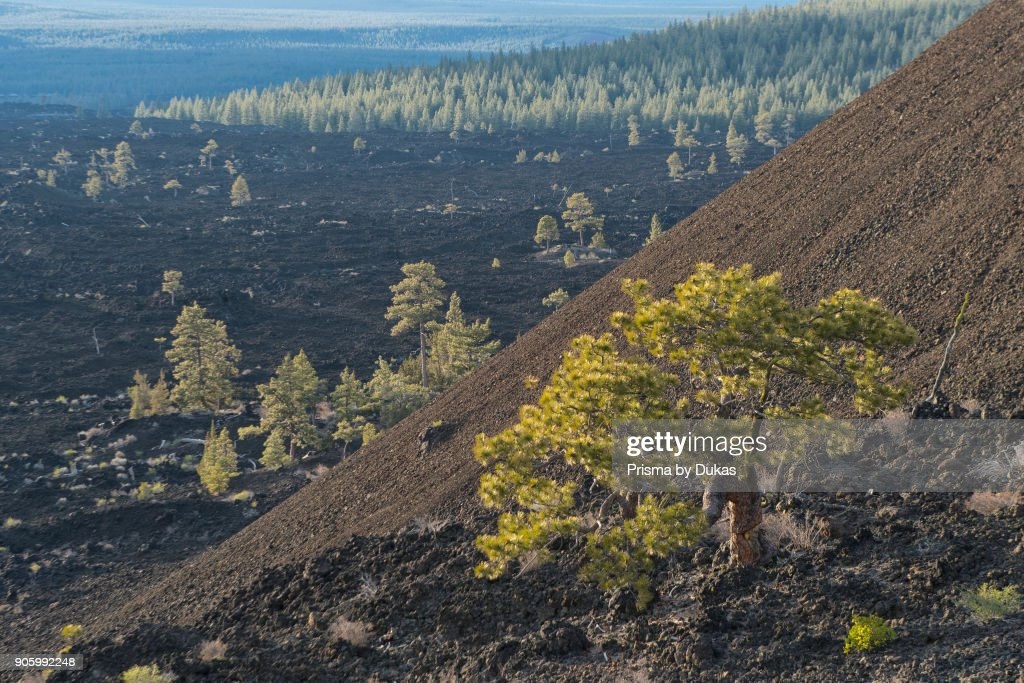 USA, Oregon, Central, Deschutes County, Lava Butte, Newberry