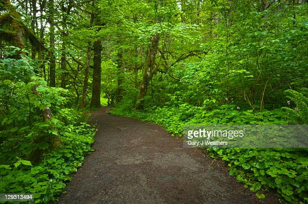 USA, Oregon, Champoeg State Park, Footpath trough forest
