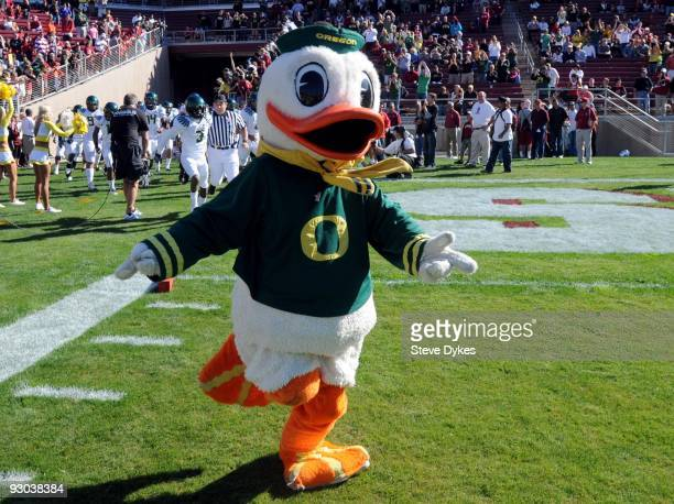 Oregon Ducks mascot Puddles the Duck leads the Oregon Ducks onto the field before the game against the Stanford Cardinal at Stanford Stadium on...