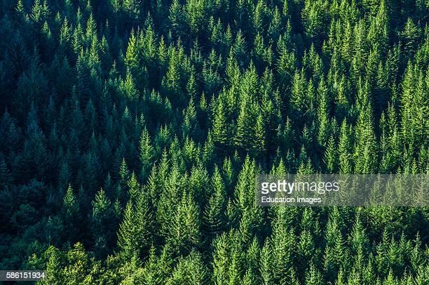 Oregon Mount Hood National Forest 20 miles east of Portland Oregon