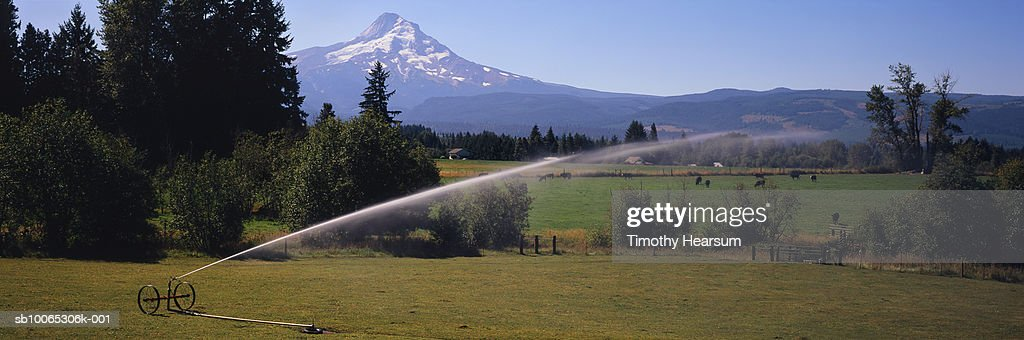 USA, Oregon, pasture being irrigated, Mt Hood in background : Foto stock