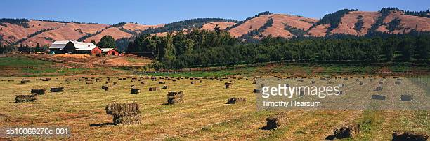 usa, oregon, pine grove, hay bales on field with pear orchard and hills in background - timothy hearsum photos et images de collection