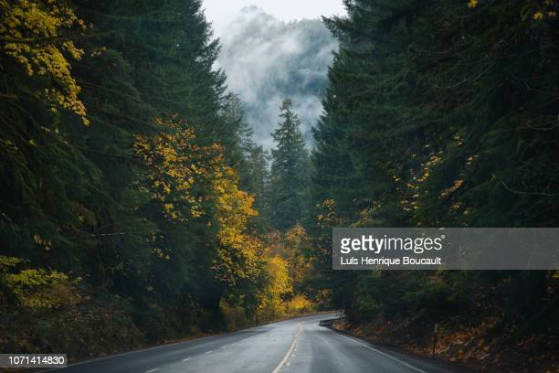 oregon roads & autumn - eugene oregon stock pictures, royalty-free photos & images