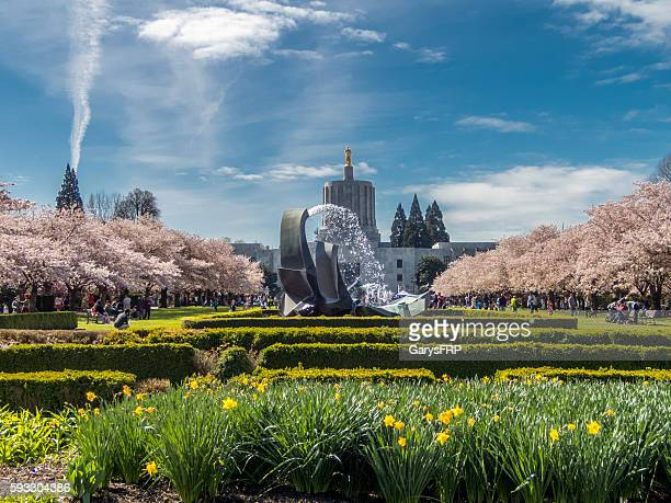 Oregon State Capitol Cherry Blossom Day Capitol Mall with Fountain