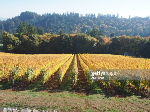 vineyard willamette valley oregon