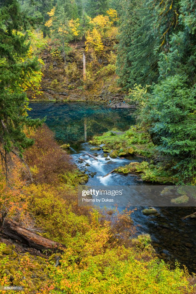 tamolitch blue pool. Oregon, Willamette National Forest, Blue Pool On The McKenzie River, Tamolitch Pool.