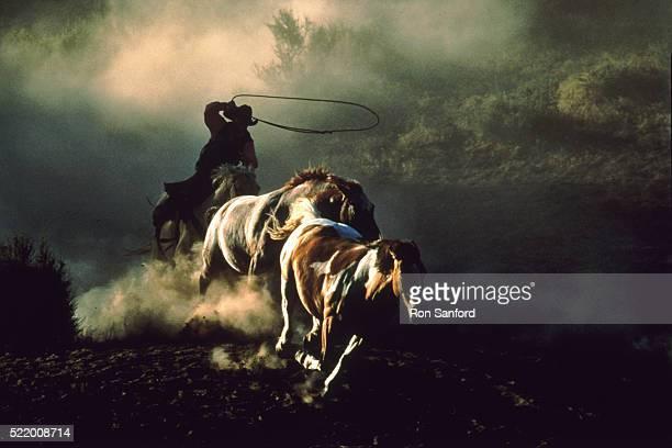 Oregon Wrangler herds horses during round up
