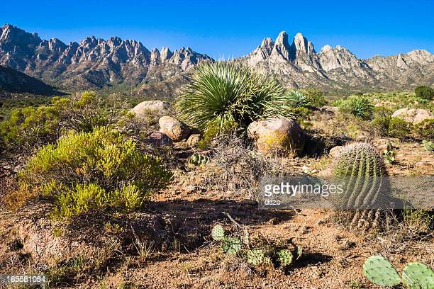 Organ Mountains seen from Aguirre Springs