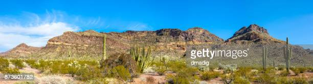 organ pipe cactus national monument, thriving cacti in arid sonoran desert under brilliant blue sky - sonoran desert stock pictures, royalty-free photos & images