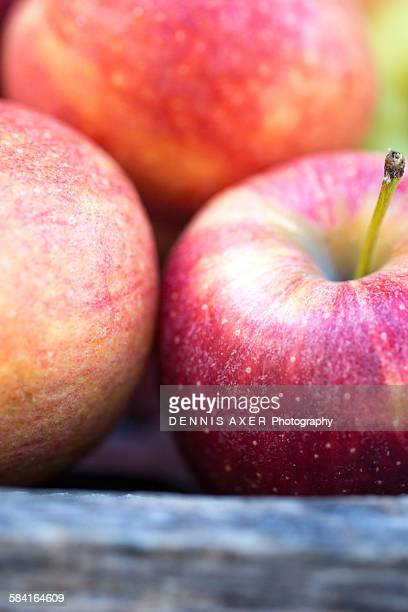 organic apples in a wooden bin - royal gala apple stock photos and pictures