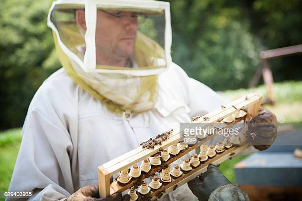 Organic Beekeeper HauteSavoie France The hives are moved throughout flowering limiting the risk of coming into contact with pesticides In order to...