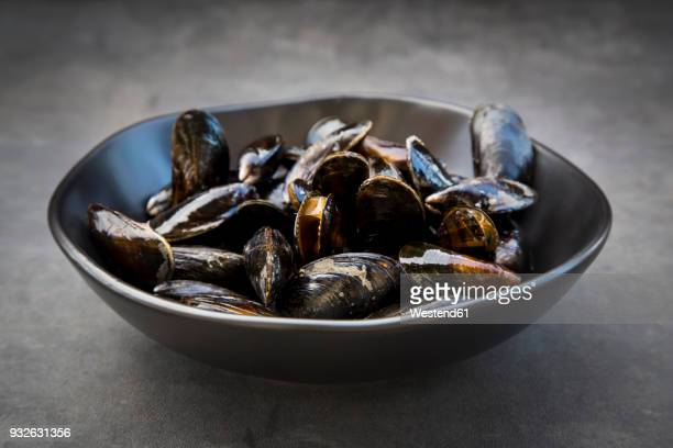 organic blue mussels - mussel stock pictures, royalty-free photos & images