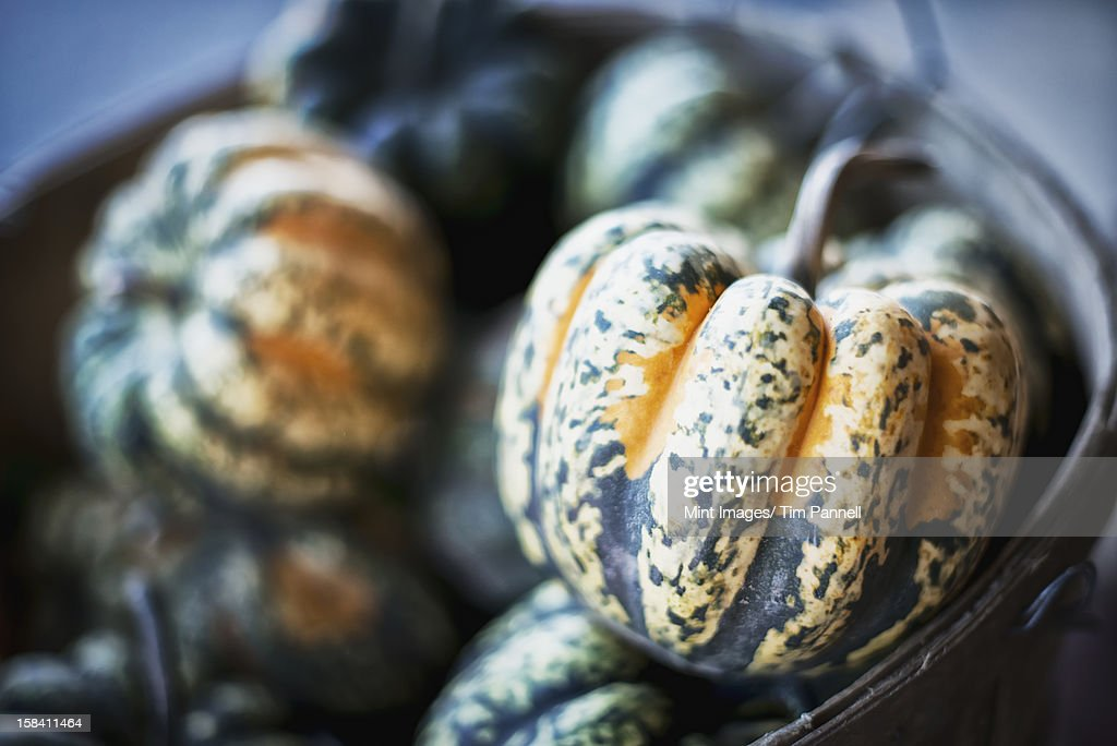 Organic Carnival Acorn Squash just harvested : Stock Photo