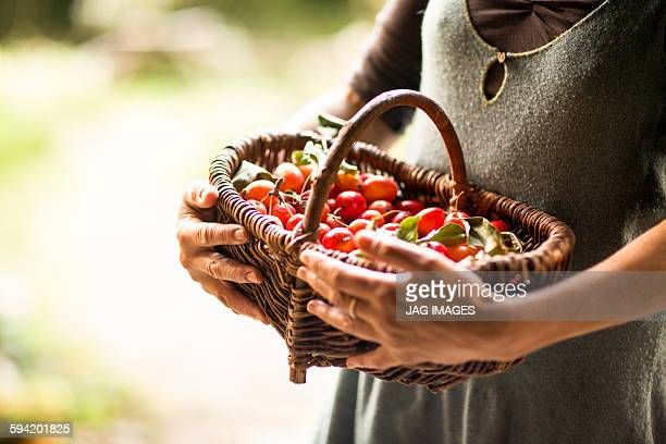 organic cherries in a basket - harvest basket stock pictures, royalty-free photos & images