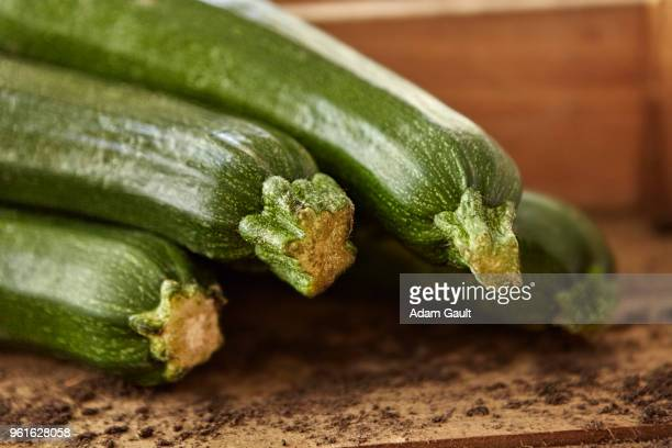 Organic Corgettes