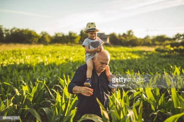 organic corn farm - serbia stock photos and pictures