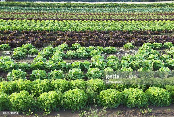 organic cultivating - mixed farming stock pictures, royalty-free photos & images