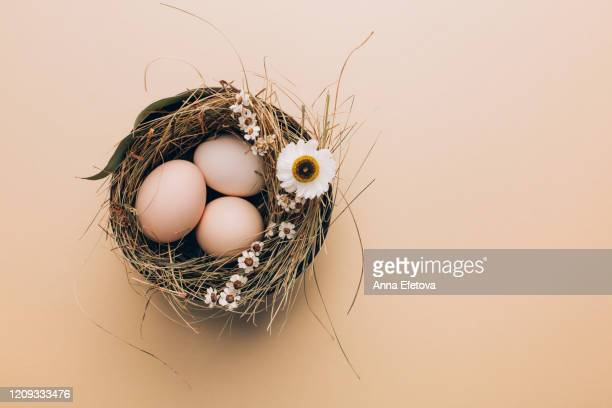 organic eggs in wicker hay - vorbeigehen stock pictures, royalty-free photos & images