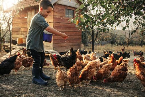 Organic Farm And Free Range Chicken Eggs 1056759048