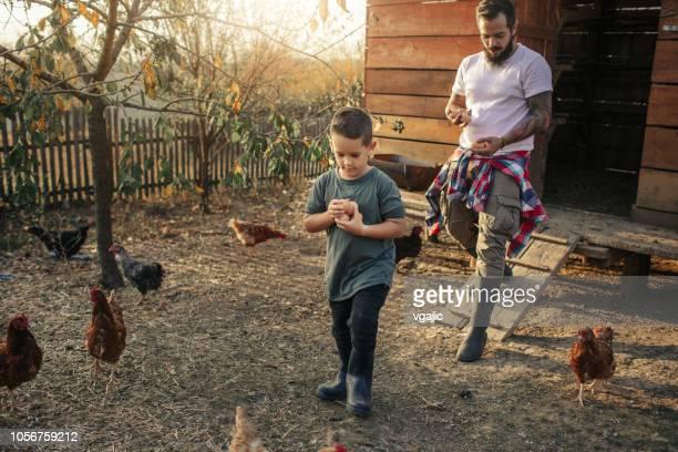 fazenda orgânica e ovos de galinha ao ar livre - bota - fotografias e filmes do acervo