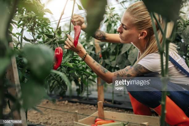 organic farm - organic farm stock photos and pictures