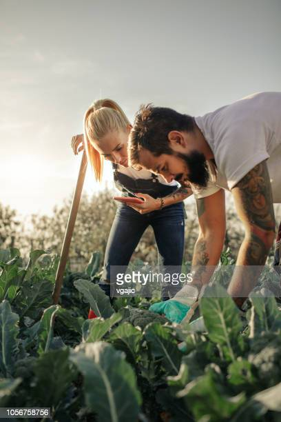 organic farm - vertical stock pictures, royalty-free photos & images
