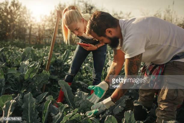 organic farm - organic farm stock pictures, royalty-free photos & images