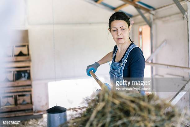 Organic Farmer cleaning out Hen House.
